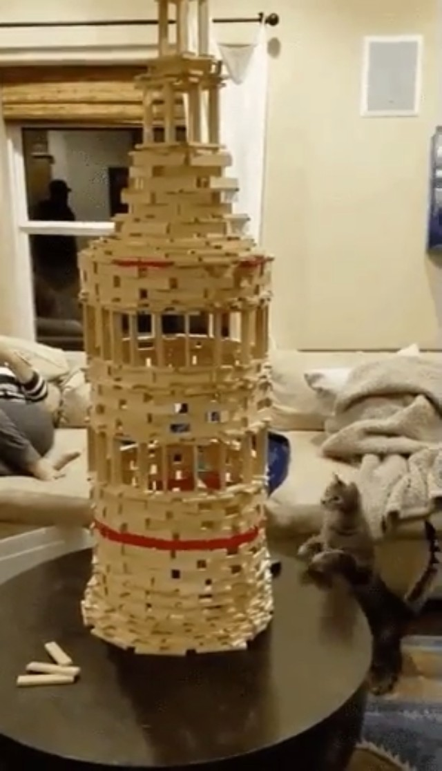 When Cats Play Jenga