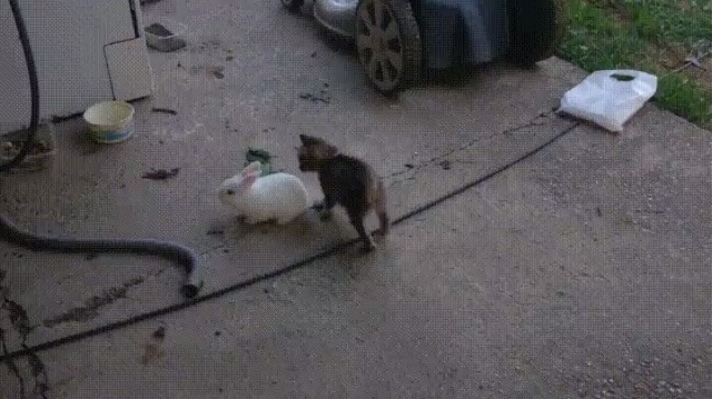A kitten and a bunny play tag