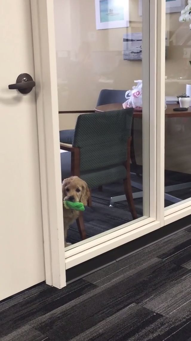 The Office Dog Wants To Play Fetch. 🐶🦴 #aww #funnydogs