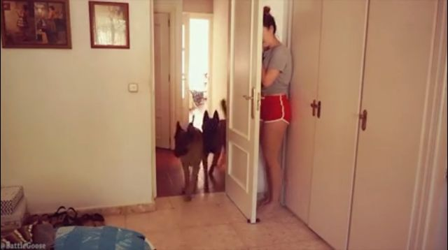 Girl plays hide and sick with the dogs