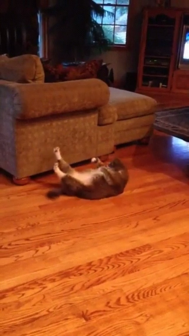 A Cat Doing Crunches