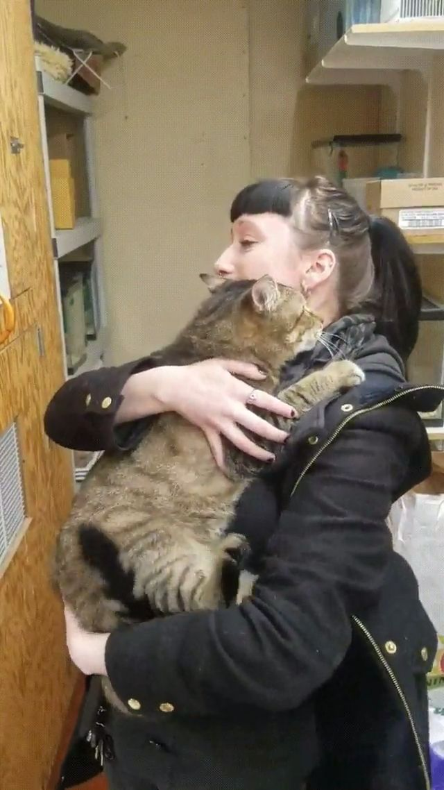 Girl visits the shelter and she got adopted! 🤣 #aww #cats