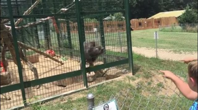 Caged #monkey just threw poop at the poor little girl... #LOL